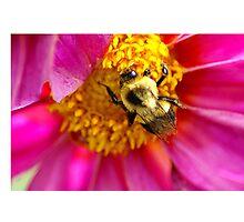 Nature beautiful Photographic Print