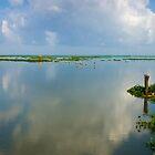 Lake Vemabanad, Kerla, India August 2012 by jackmbernstein