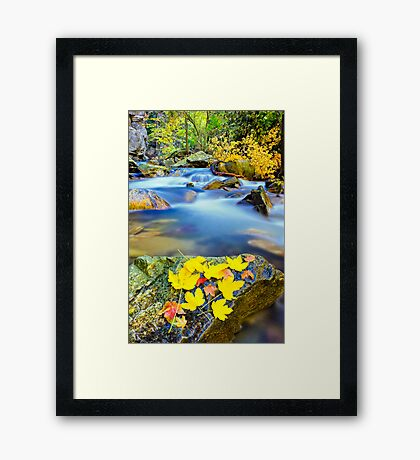 autumn along the river Framed Print