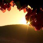Petals by Ben  May