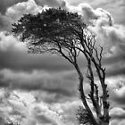 Wind &amp; Wuthering by Michael Carter