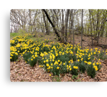 Daffodils in the Forest Canvas Print