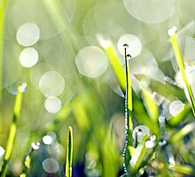 Early morning dew drops on grass... my version of it... ♥ by Gregoria  Gregoriou Crowe