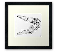 Eater of Molluscs Framed Print
