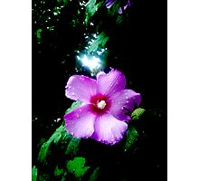 Enchanted Flower Photographic Print
