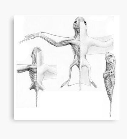 Anurognath Muscle Study Canvas Print
