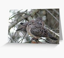 Juvenile Doves Greeting Card