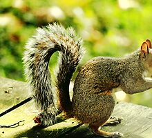 Squirrel eating a nut by loriwellsphoto