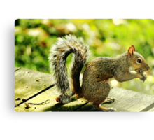 Squirrel eating a nut Canvas Print