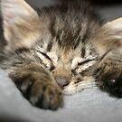 Good night! by garigots