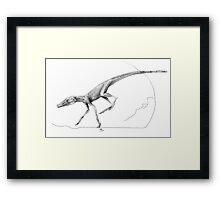 Terrestrisuchus Muscle Study Framed Print