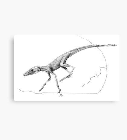 Terrestrisuchus Muscle Study Canvas Print