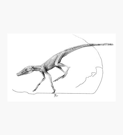 Terrestrisuchus Muscle Study Photographic Print