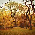 Autumn in Central Park, New York City by Vivienne Gucwa