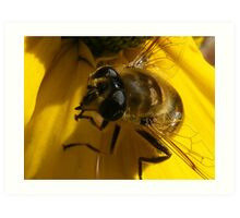 And yet another hover fly ha ha Art Print