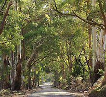 Swanpool -Strathbogie Road by phillip wise
