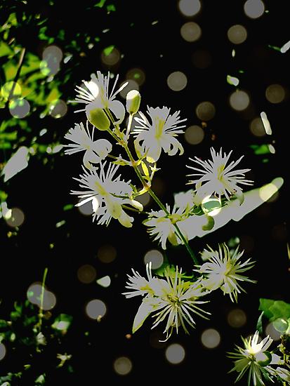 Sparkle by Jess Meacham