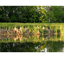 Pond Side Photographic Print