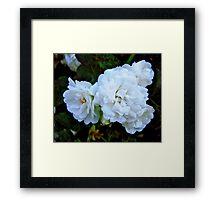 Governor General's Roses Framed Print