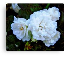 Governor General's Roses Canvas Print