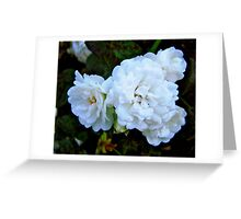 Governor General's Roses Greeting Card