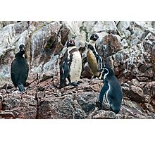 Penguin. Photographic Print