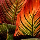 Vivid Canna Leaves, in HDR by WildestArt