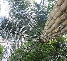 Tree fern  by phillip wise