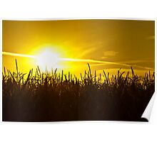 Sunset in Washington Poster