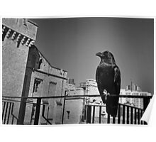 Raven at The Tower of London, B&W Poster