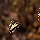 Dancing Butterflies by Csar Torres