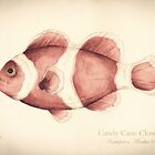 Candy Cane Clown Fish by Ashly Bohinc by SharksEatMeat