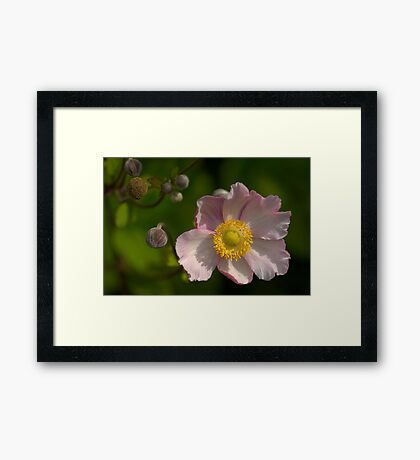 Daughter in the wind Framed Print