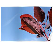 red leaves and rain drops Poster