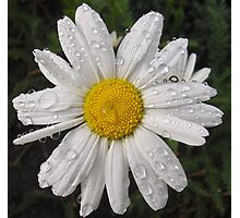 Daisy with water drops Photographic Print
