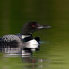 By her side - Common loon and chick by Jim Cumming