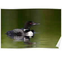 By her side - Common loon and chick Poster