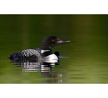 By her side - Common loon and chick Photographic Print