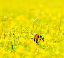 Pheasant In The Buttercup Meadow by George Wheelhouse