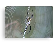 Scholastic Web Canvas Print