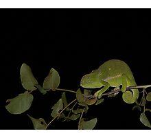 Chamelion at night Photographic Print