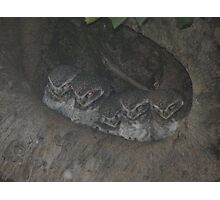 Jungle Owlet Kahna NP Photographic Print