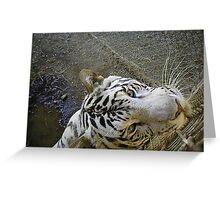 white male tiger very curious  Greeting Card