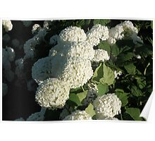 Little White Petals Poster