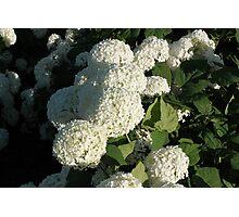Little White Petals Photographic Print