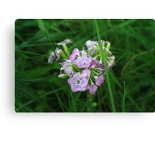 Springtime Flowers Canvas Print