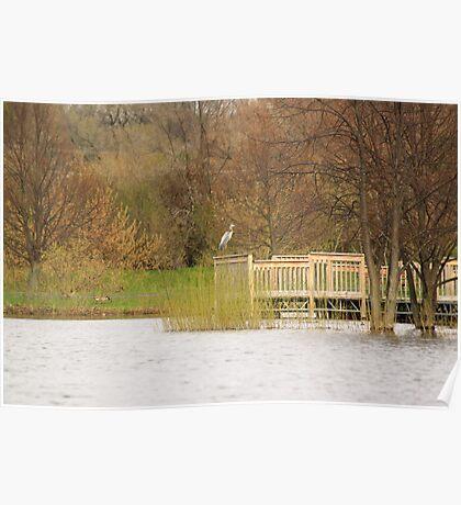 Perched Crane Poster