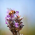 The Unbearable Lightness of Bee-ing by Christopher Burton