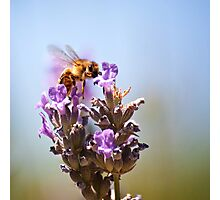 The Unbearable Lightness of Bee-ing Photographic Print