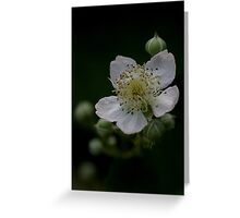 Blackberry flower in a hedgerow Greeting Card
